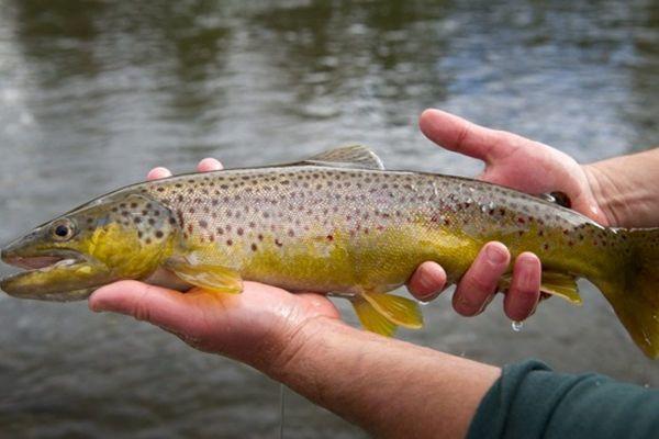 Рыбалка на реке Эчемиш