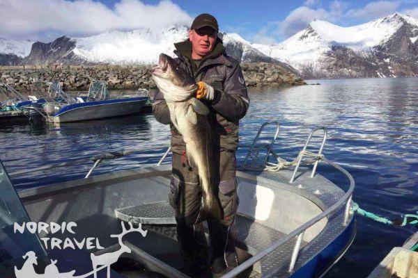 Трофейная рыбалка в северной Норвегии (остров Сенья)